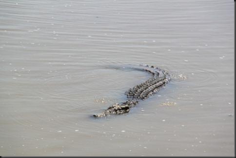 Croc Hawaii